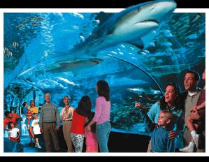 gat-aquarium1