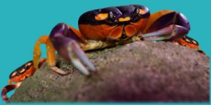 Ripleys_Aquarium_Gatlinburg_Swarm_halloween_crabs