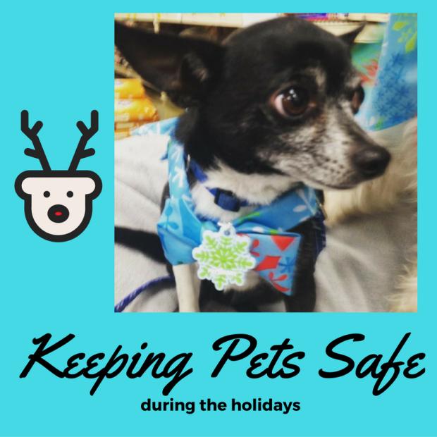 keeping-pets-safe
